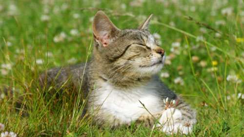 cat-in-grass-for-web