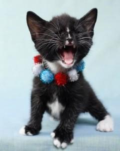 4thjuly kitten