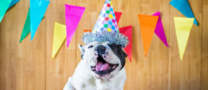 A dog wears a birthday party hat