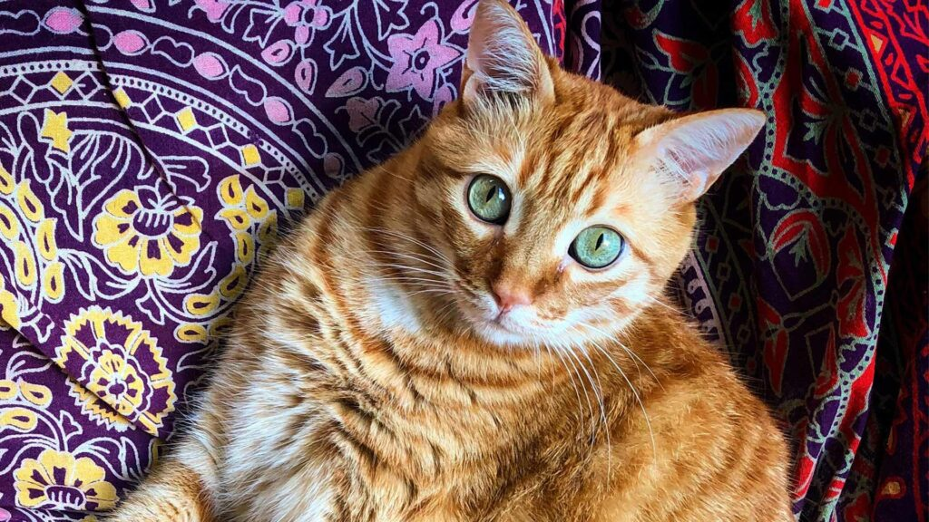 A cat sits on a colorful blanket